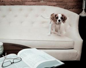 That Lawyer Dog